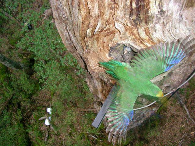 2004-11-11 18-48-49 Nest 13