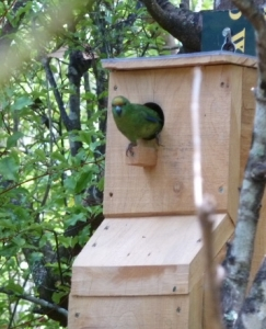 M-RR Nest box 1 12 Feb 2013_1