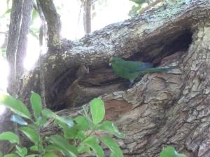 Nest one 011